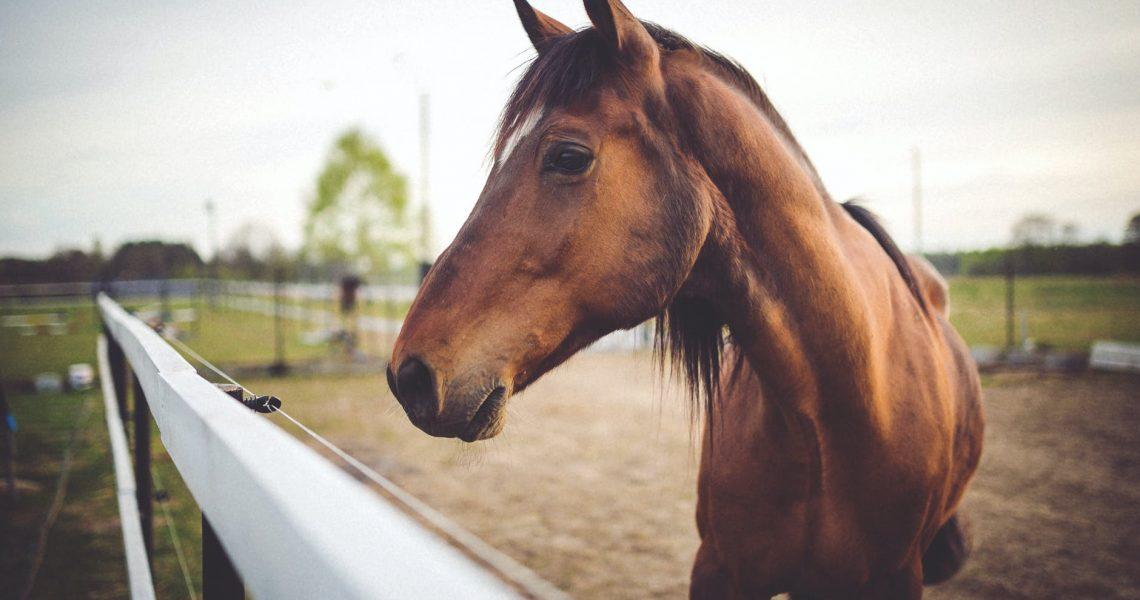 不一樣的越南胡志明市!Saigon Pony Club法國教練專業馬術課程,超狂費用省60%!